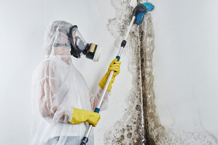 Dangers Of Black Mold And Mold Remediation