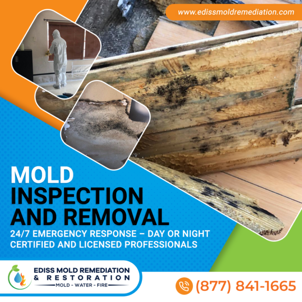 Mold Inspection Removal