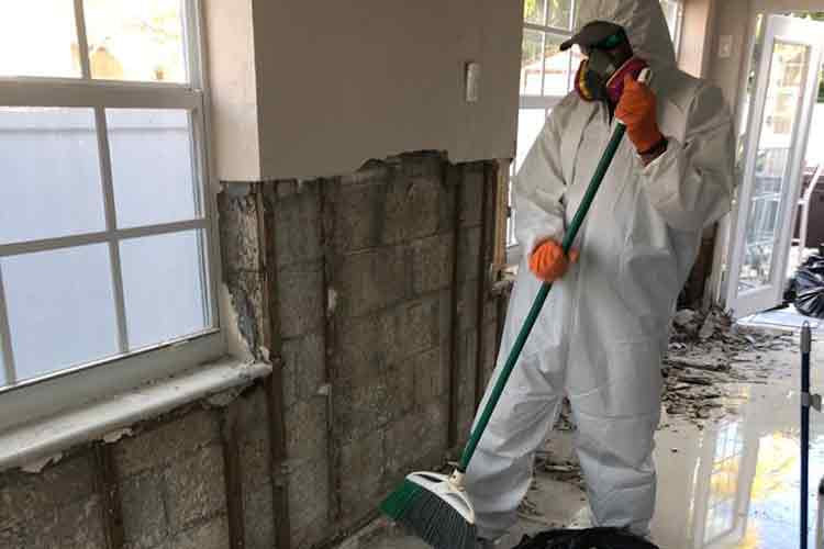 Remedy Mold Damage With Expert Mold Removal