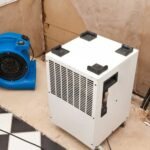 Professional Mold Removal Services Improve Indoor Air Quality