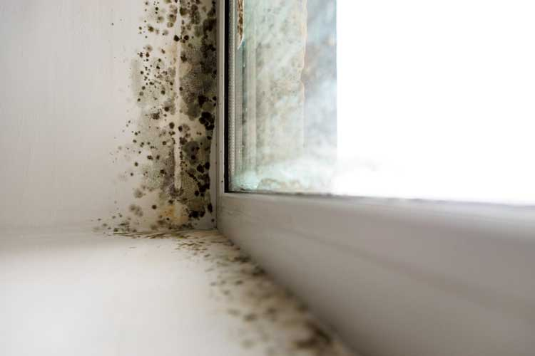 Water Damage Restoration Company For Leak Detection Services